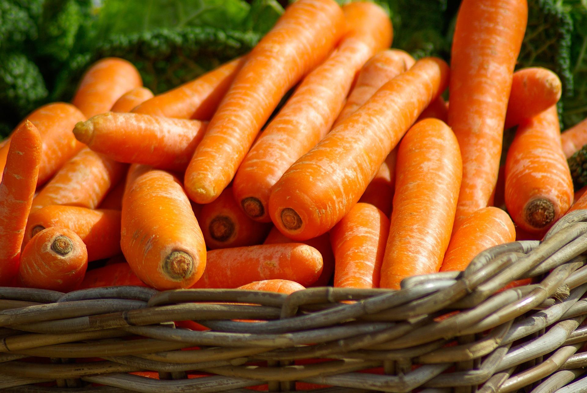 Panier de carottes fraiches